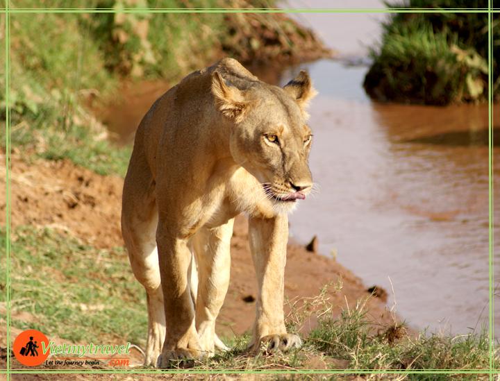du lịch kenya