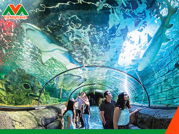 Sealife Aquarium - vietmytravel