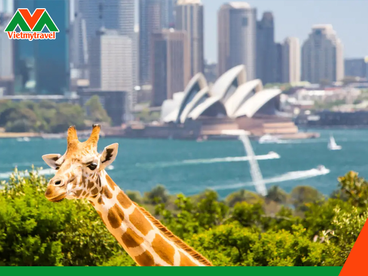 Sydney Wildlife Zoo-vietmytravel