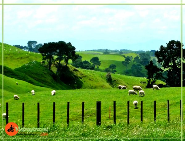 du lịch New Zealand Vietmytravel