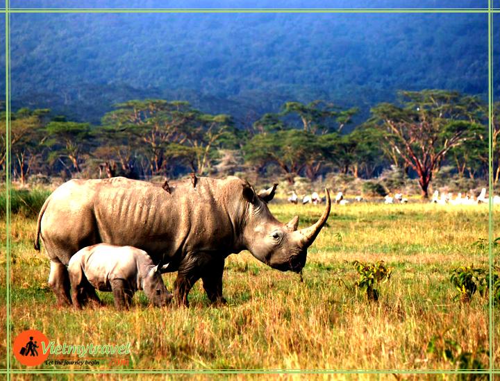 du lịch Đông Phi Vietmytravel