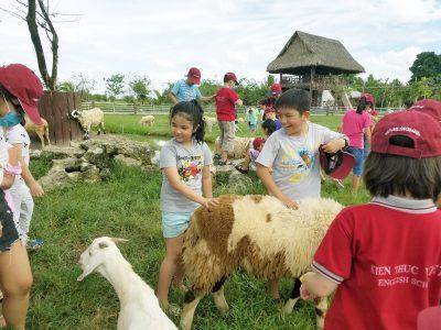 du lịch nông trang xanh Vietmytravel