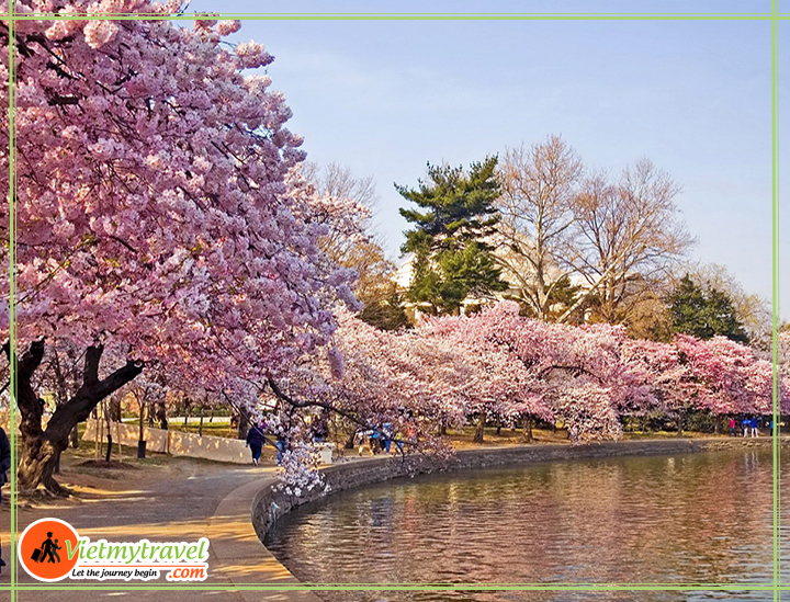 Muốn du lịch Mỹ giá rẻ hãy đến vào khoảng từ tháng 3 - 4 hằng năm