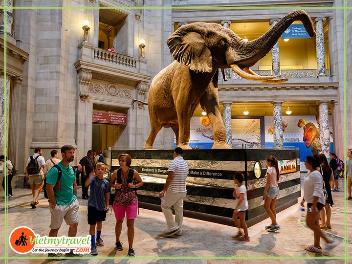 Tour du lịch Mỹ liên tuyến Đông Tây - Bảo tàng tự nhiên Hoa Kỳ.