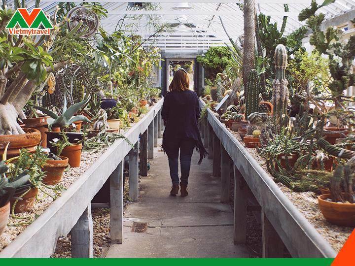 Cactus Garden-my-vietmytravel